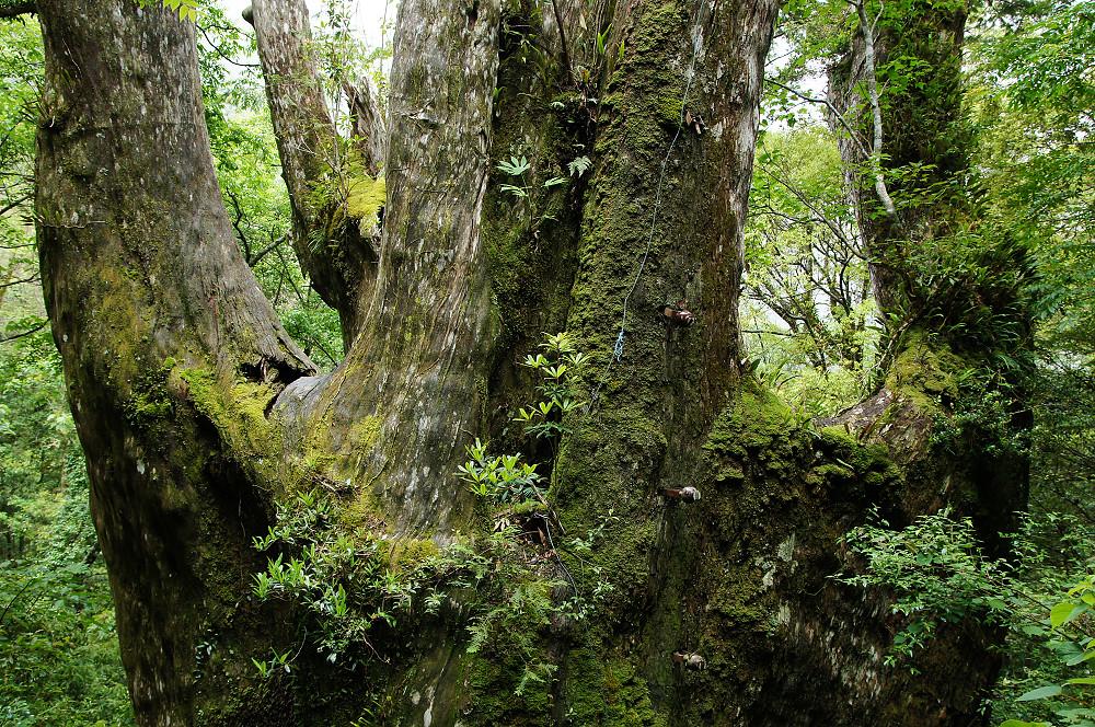 巨木群,與往拉拉山的路上-072