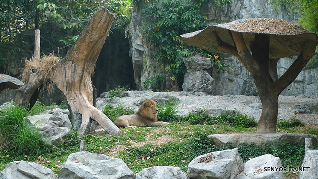 The Lion King hehe :P