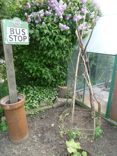 Sweet peas and bus stop