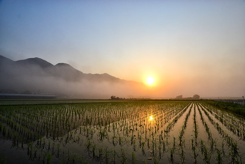 morning mist nature japan fog sunrise spring fantastic day may sigma mysterious shimane paddyfield izumo 田んぼ 10mm 島根 霧 出雲 山陰 朝霧 ミスト d3100