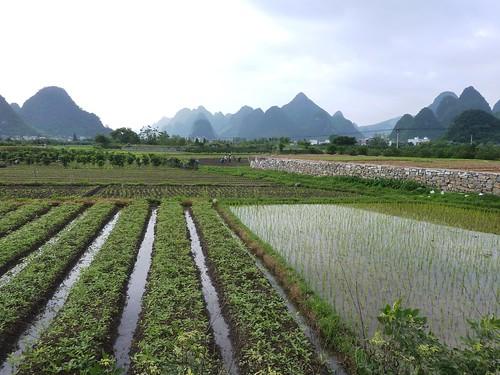 C-Guangxi-Yangshuo-Tour-Yulong (6)