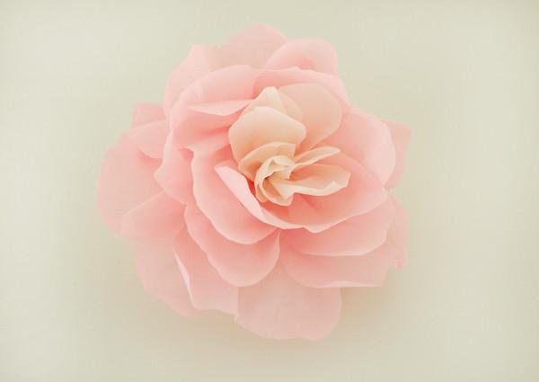 wall flower0
