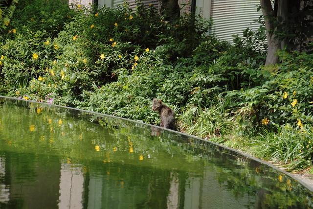 水面に映る猫 2