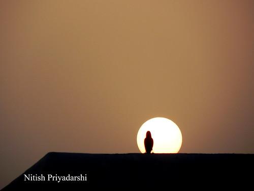 sunset sun bird set