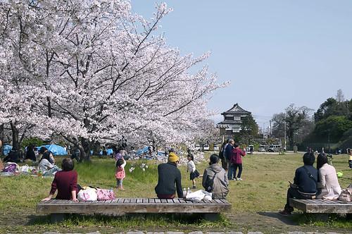 Hanami 2014 Fukuoka