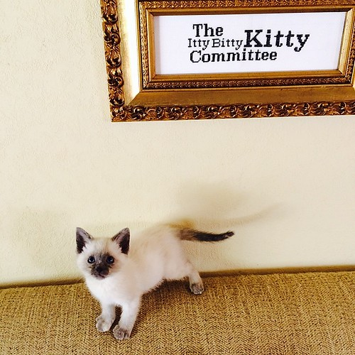 Tiny committee member, Effie Brisker.