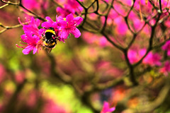 busy as a (bumble)bee