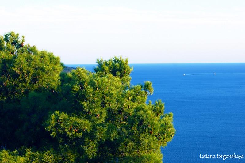 Сосна и море