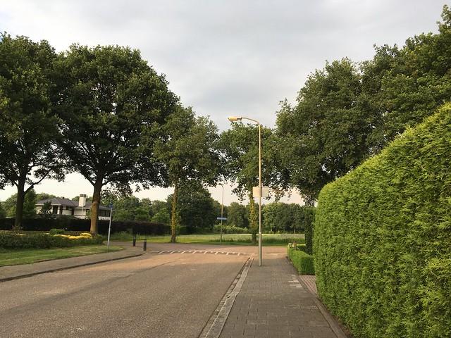 IMG_0445-NL