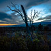Sunset Over Mauna Loa by Dan Lanctot