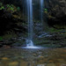 Grotto Falls Salamander by Photomatt28