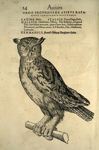 007-buho-Icones animalium- (1553)- Conrad  Gesner- SICD Strasbourg