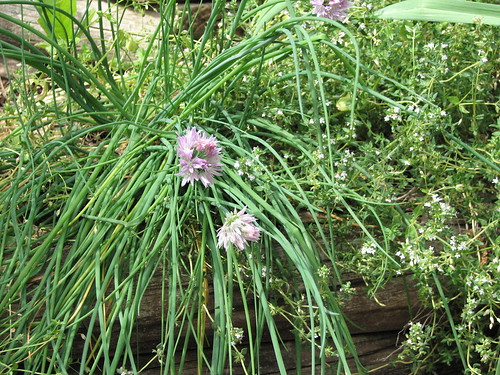 chives and thyme