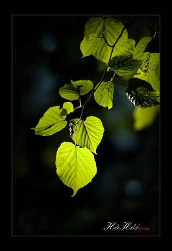 Nắng xanh - Green sunshine by Ha Hai
