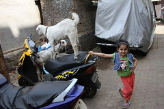 Even Street Photographers Learnt To Emote ..As Playful as Little Goats by firoze shakir photographerno1