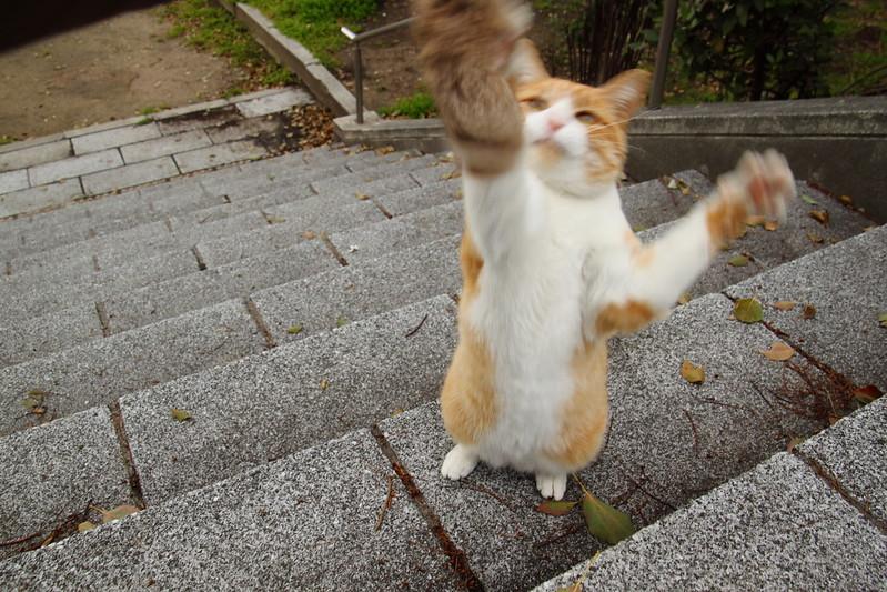 おいしそうな脚の女子校生 237脚目猫ガイジ隔離スレ [無断転載禁止]©bbspink.comYouTube動画>1本 ->画像>3567枚