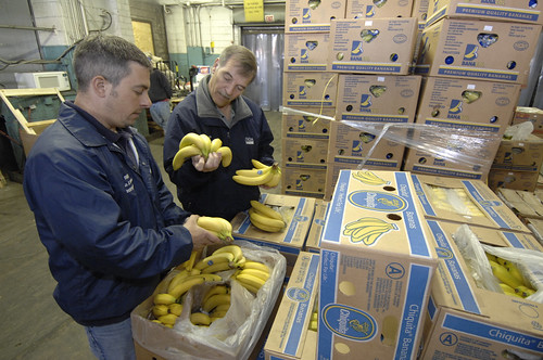 U. S. Department of Agriculture (USDA) Agricultural Marketing Service (AMS) inspectors Geno DeSanto and Bob Schofield examine bananas at the Philadelphia Food Distribution Center in Philadelphia, Pennsylvania on May 21, 2008.USDA photo.