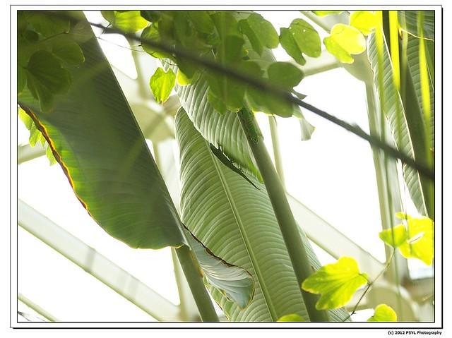 2012-04-16-P4160348_nEO_IMG