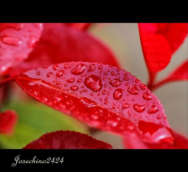 Llueve sobre rojo