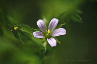 tiny wildflower