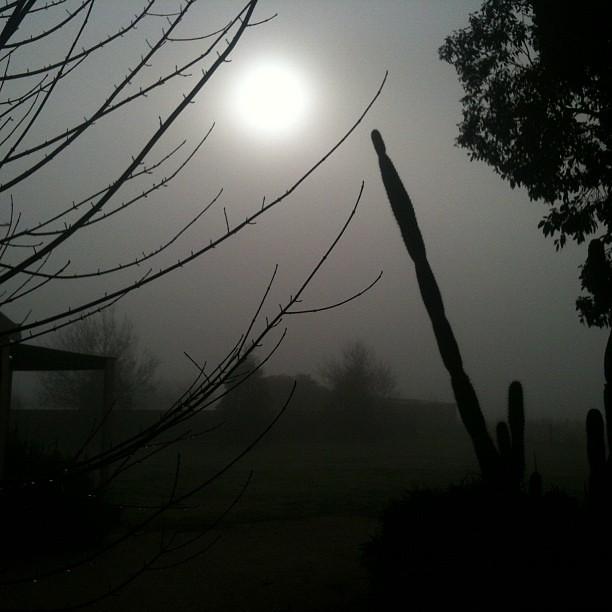 Mist at Lancefield