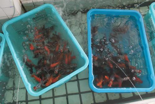 Mandjes met verkochte vissen