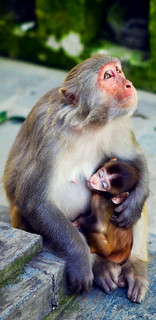 Monkey mother and Child in Nepal (www.kunst-und-gedanke.de)