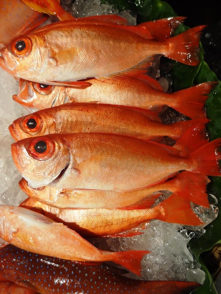 以延繩釣釣紅目鰱十分耗費精神、時間,而採用魚網捕撈則往往造成過漁現象,老漁夫感嘆近年魚越來越少,若無積極的法令或政策進行漁業資源管理,或許不久後,這抹紅也會逐漸消失。