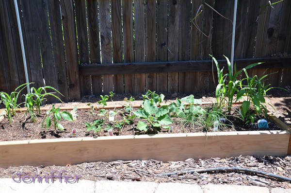 Gardening 5/20