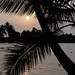 Small photo of Alleppey sunset