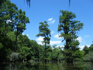 Sparkleberry Swamp Jun 2, 2012 3-01 PM