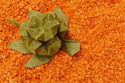 Origami Star turtle/ Origami Tartaruga stellata (Roberto Gretter)