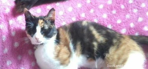 Sun, Apr 6th, 2014 Lost Female Cat - Dillonscross - Glen - Blackpool, Cork