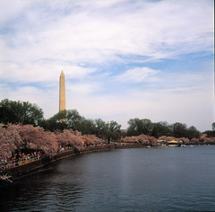 Cherry Blossom Festival - Turning Basin - Washington, D.C.