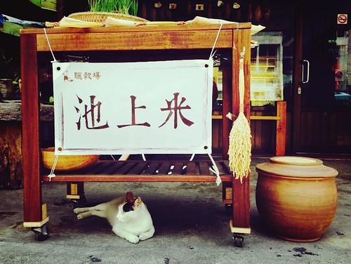 台東縣池上鄉周邊景點吃喝玩樂懶人包 (13)