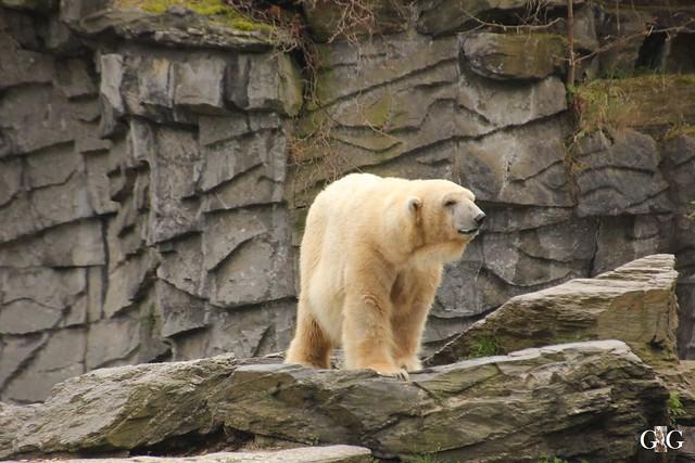 Besuch Tierpark Friedrichsfelde 17.04.2016103