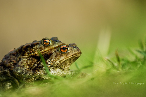He Ain't Heavy by Dave Brightwell