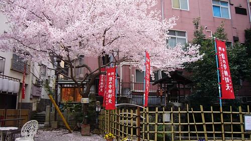 津の守弁財天の桜