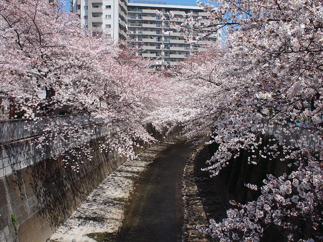 神田上水公園