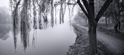 usa white lake reflection tree photography virginia us path unitedstatesofamerica foggy eerie willow dreamy lonely melancholic blak
