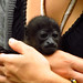 Baby howler monkey being extra babied by a volunteer :). Jaguar Rescue Centre. Puerto Viejo, Costa Rica