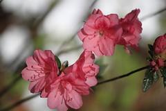 2012 Spring flowers