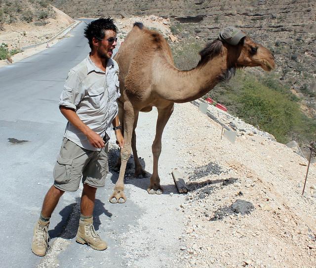 Trendy Camel