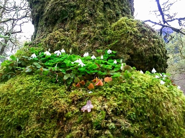 Flickr photo sharing - Flowers that grow on tree trunks ...