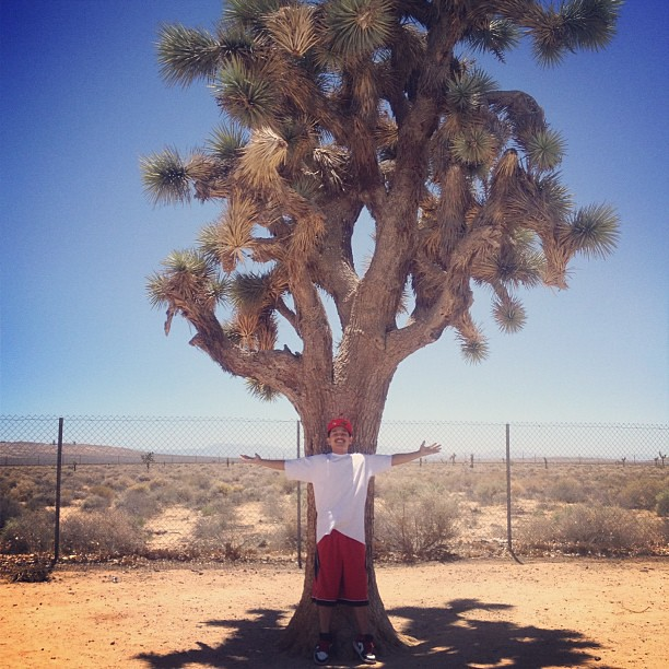 @fresh2death209 and his Joshua tree