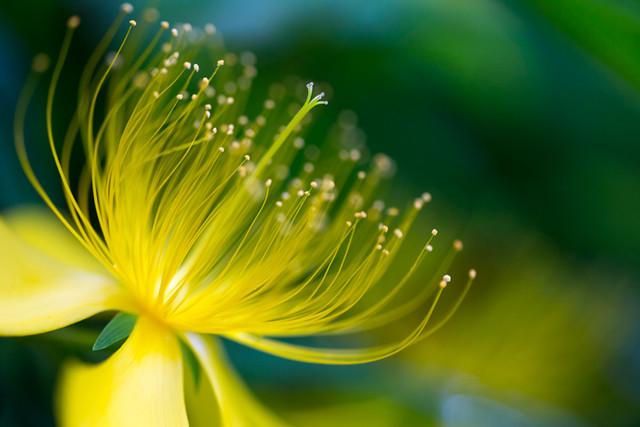 Nature Flowers Field of flowers | Nature Flowers Field of fl… | Flickr | 427x640