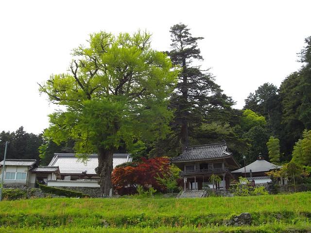 天福寺 #5