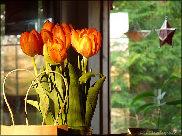 P1250537_tulips