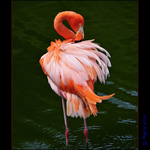 FLAMINGO by mickeydud