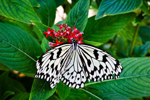 IMAGE: http://farm8.staticflickr.com/7234/7239279634_c468589638_z.jpg